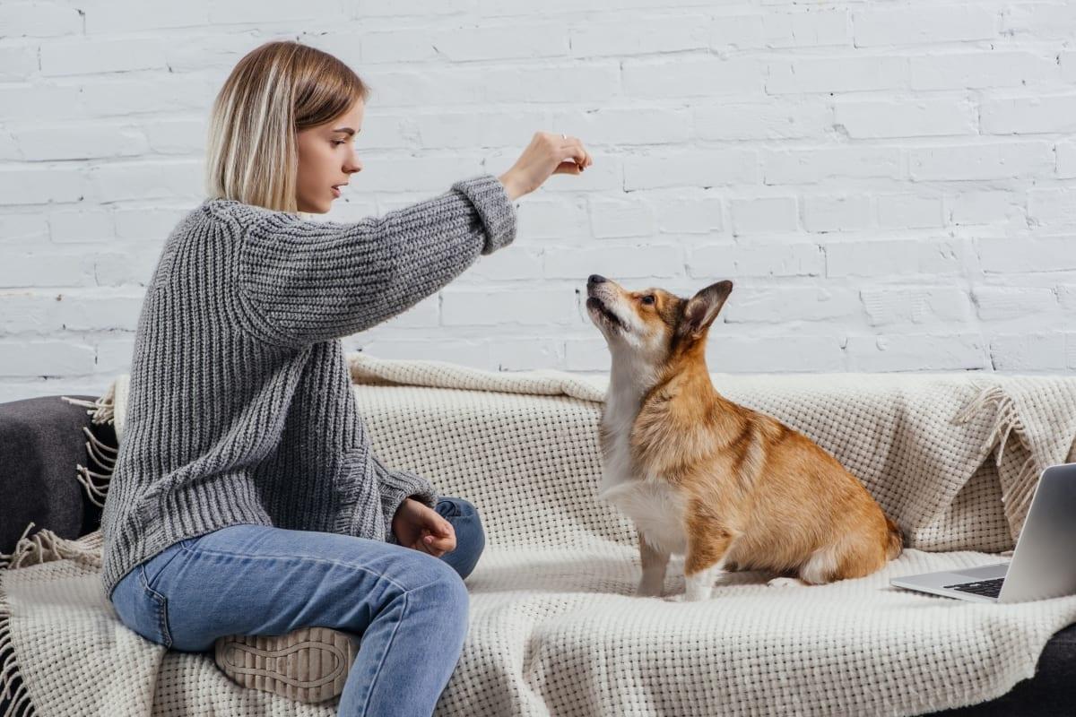 Woman feeding dog CBD chewy dog treats