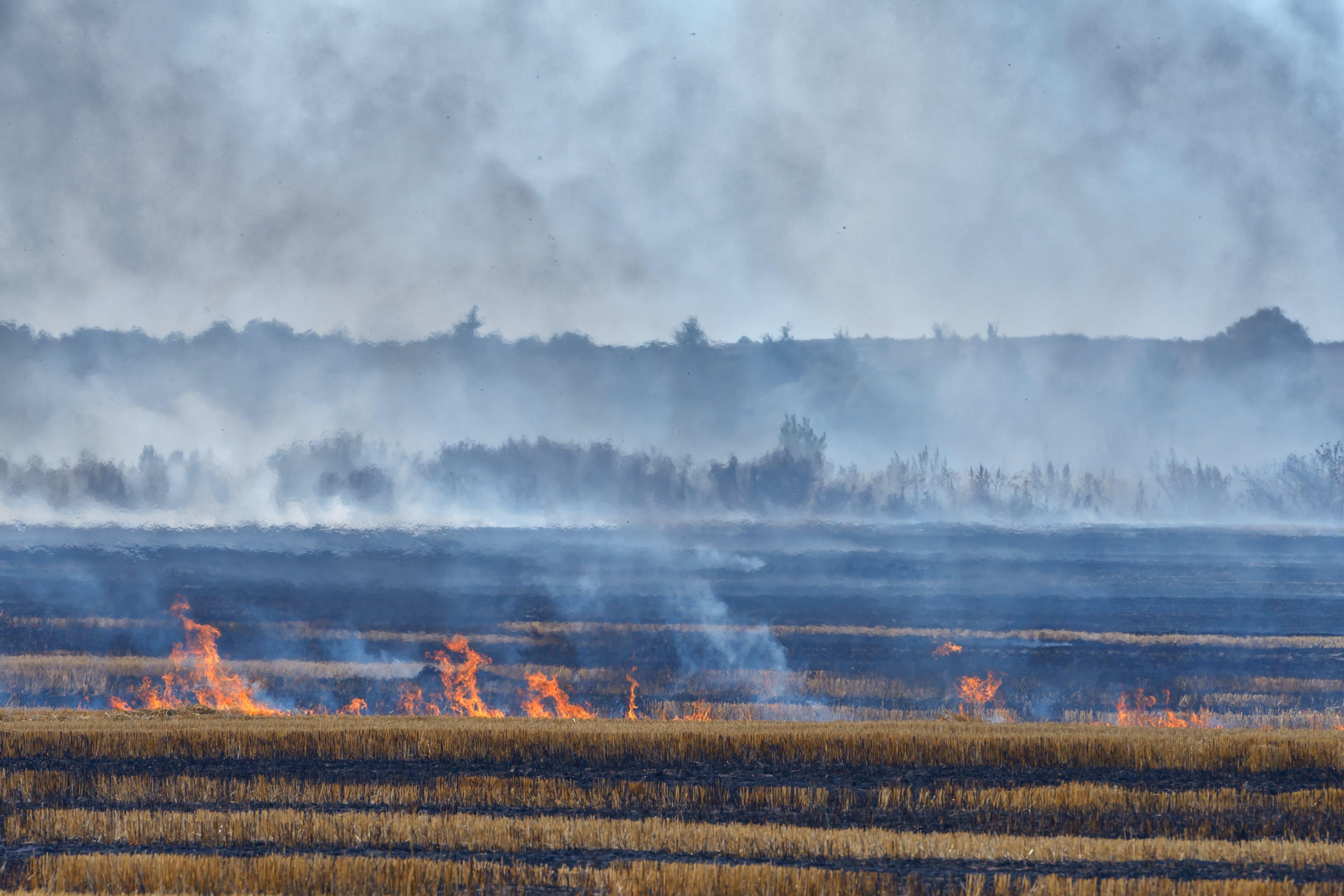 Wildfire burning down hemp fields